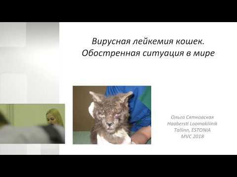 Ольга Сятковская - Вирусная лейкемия кошек