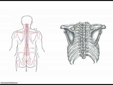 Trattamento sanatorio Ucraina hop-colonna vertebrale