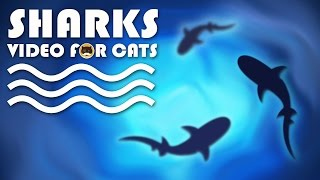 CAT GAMES - Sharks Swimming in the Ocean. Fish Video for Cats.