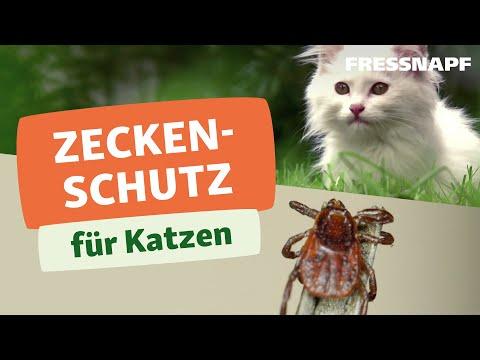 Zeckenschutz für die Katze