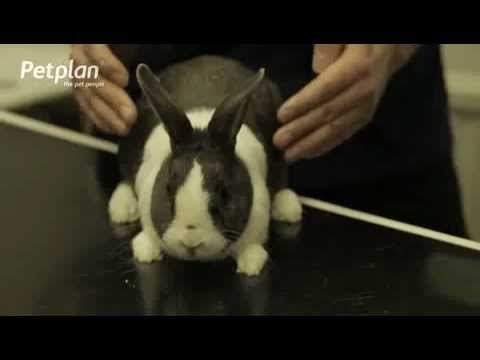 , title : 'Rabbit Snuffles - Petplan Common Illnesses