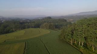DJI Tello Footage Above Rice Field - Magelang, Indonesia