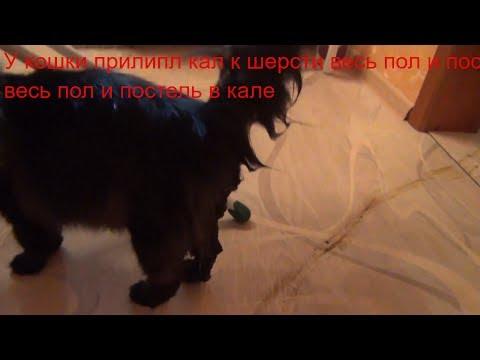 У кошки прилипл кал к шерсти  Весь пол постель в кале  Вымыли кошке зад  Как держать кошку при мытье