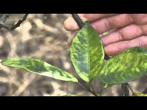 Lotseril fungus review