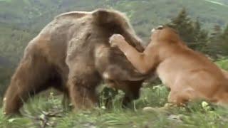 8 Mountain Lion Encounters That Will TERRIFY You