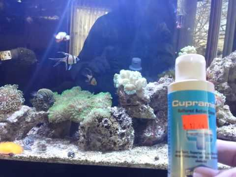Video How to treat ick in your reef tank.
