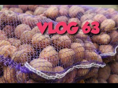 ПЕРВЫЕ ЗАГОТОВКИ НА ЗИМУ/ #VLOG 63