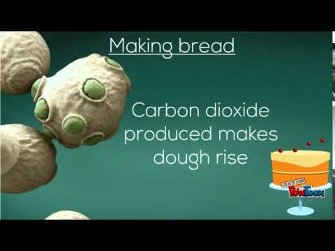 Video Microorganisms and their use in Industry -National 4