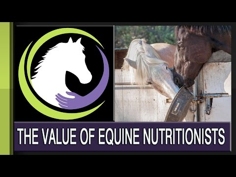 The Value of an Equine Nutritionist on Your Team