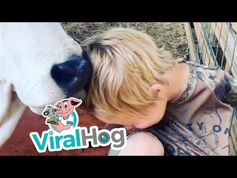 איך נראה שיער בעיצוב של פרה? בסרטון החמוד הזה תגלו את התשובה!