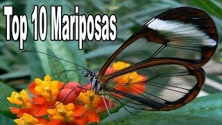Las 10 Mariposas Más Bellas Del Mundo