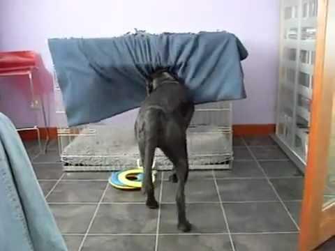 Δείτε τι έκανε αυτό το σκυλί επειδή κρύωσε!