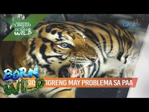 Giardia Sintomas at Paggamot Home