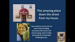 Cats Cradle Shelter Love & Learn Webinars