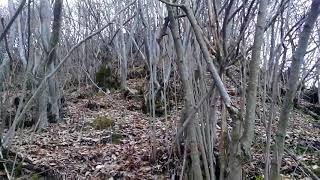 Лес которое люди не знают. одиночный поход в лес. туризм в лесу. загадочный лес