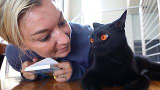 no matter what we do, my cat hates my girlfriend