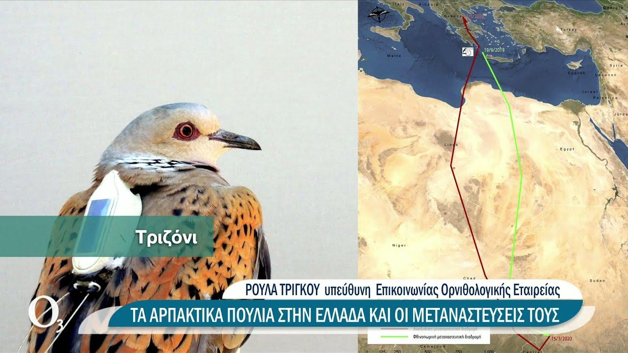 Παρακολουθώντας τον θαυμαστό κόσμο των μεταναστευτικών πουλιών | 23/06/2021 | ΕΡΤ