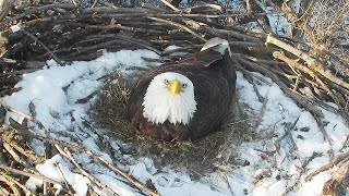 Nongame Wildlife EagleCam