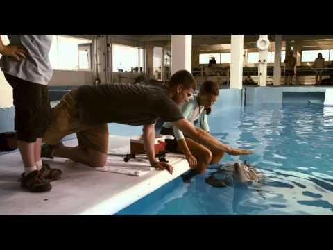Trailer La gran aventura de Winter el delfín