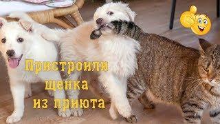 Взяли щенка Пуфика из приюта Не хотел идти домой! Что он творит!? 😃