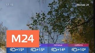 Теплая погода сохранится до конца недели в столице - Москва 24