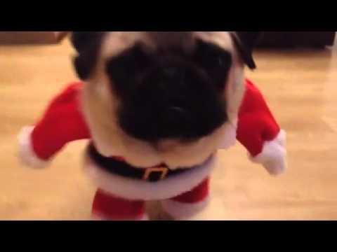 ¡Santa Pug está llegando!