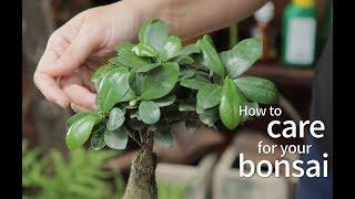 Bonsai Basics: How to care for your bonsai