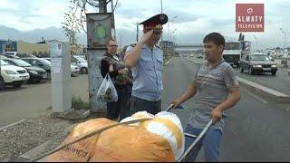В Алматы полицейские массово штрафуют велосипедистов и грузчиков (09.09.16)