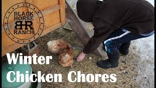Winter Chicken Chores