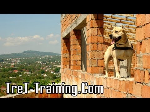 The Parkour Dog - Amazing!