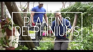 Planting Delphiniums With Glenwood Weber, A How-to Plant A Garden Technique