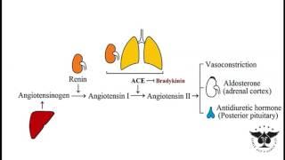 222 - Adrenal medulla and cortex (zona glomerulosa/fasciculata/reticularis)... - USMLE STEP 1 ACE