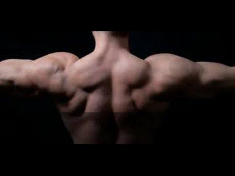Quest-ce que cest peronealnaya le groupe des muscles de la jambe