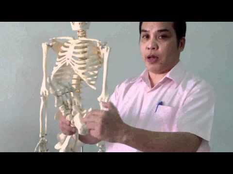 มือขวา Hilak ในการรักษา Giardia