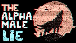 """Why I hate typical """"How to be an Alpha Male"""" videos"""