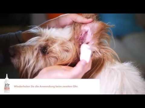 FRONTLINE PET CARE Ohrreiniger - wie Sie die Ohren Ihres Hundes oder Ihrer Katze reinigen