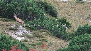 Hirschjagd in den Tauern - Rotwildbrunft am Großglockner - jagenNRW