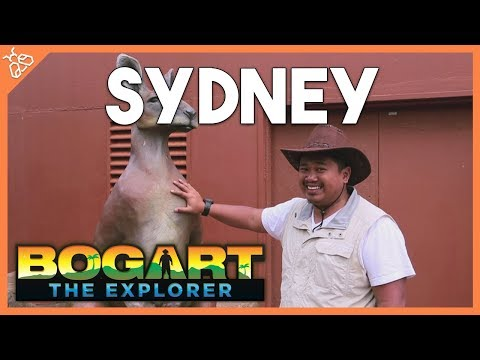 Bogart the Explorer: SYDNEY