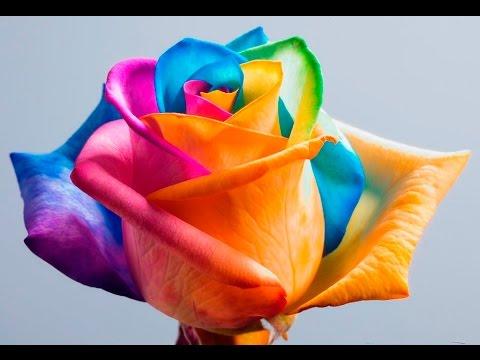 ТОП 10 Самые ДОРОГИЕ и РЕДКИЕ цветы в мире/ЛЮБОПЫТНЫЕ ФАКТЫ