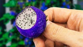 STRANGEST Hybrid Fruits In The World!