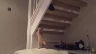 Spider Cat Spider Cat....