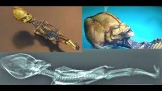 Steven Greer - Mediálna manipulácia okolo ET z Atacama