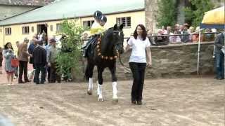 video of Kostolany