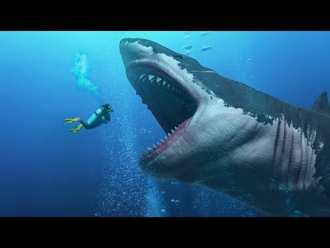 Did They Find An Alive Megalodon In The Mariana Trench ?