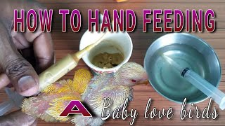 How to #handfeeding baby #lovebirds, #budgies & other parrots