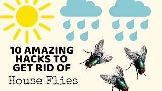 10 Cleaning Hacks to get rid of HOUSE FLIES in Monsoons - TESTED!   Non-Toxic ways