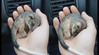 Farmer Saves Baby Possum From Freezing