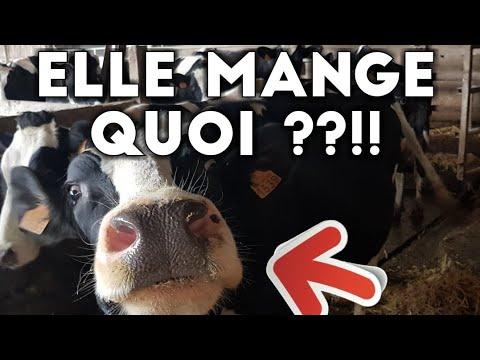 Que mange une vache en France ?