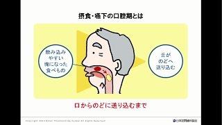 摂食・嚥下の口腔期ってなに?