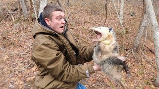 GIANT OPOSSUM! Possible World Record